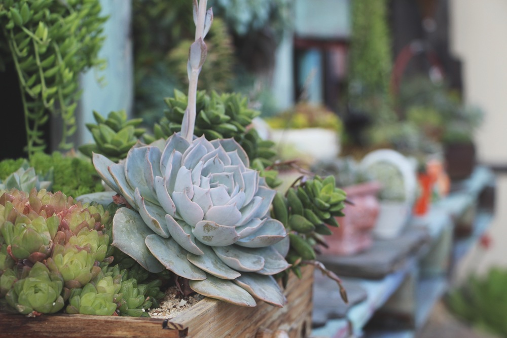 Succulent Cafe Oceanside via Needles + Leaves
