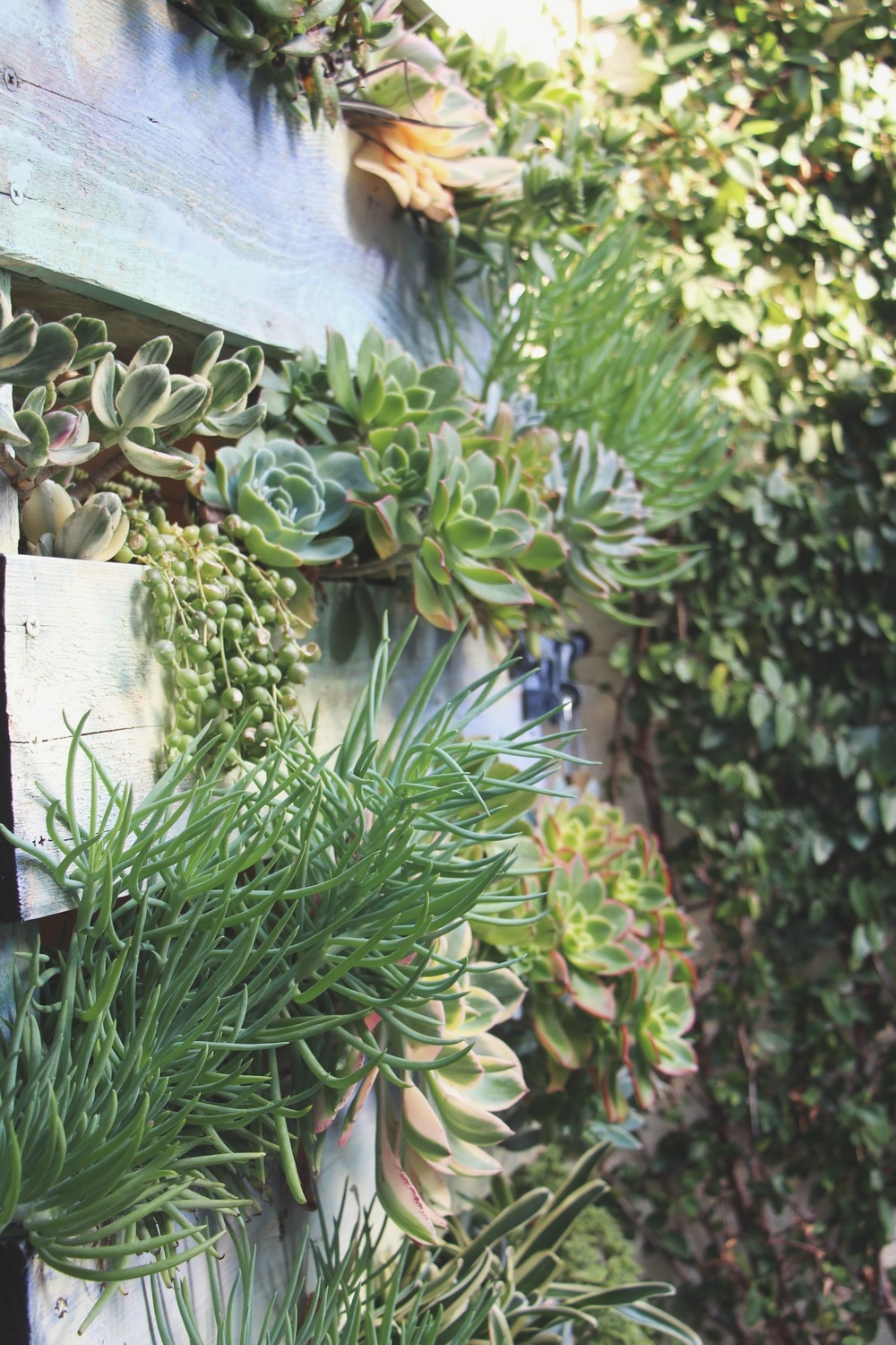 Succulent Cafe Oceanside Vertical Pallet Succulent Garden via Needles + Leaves