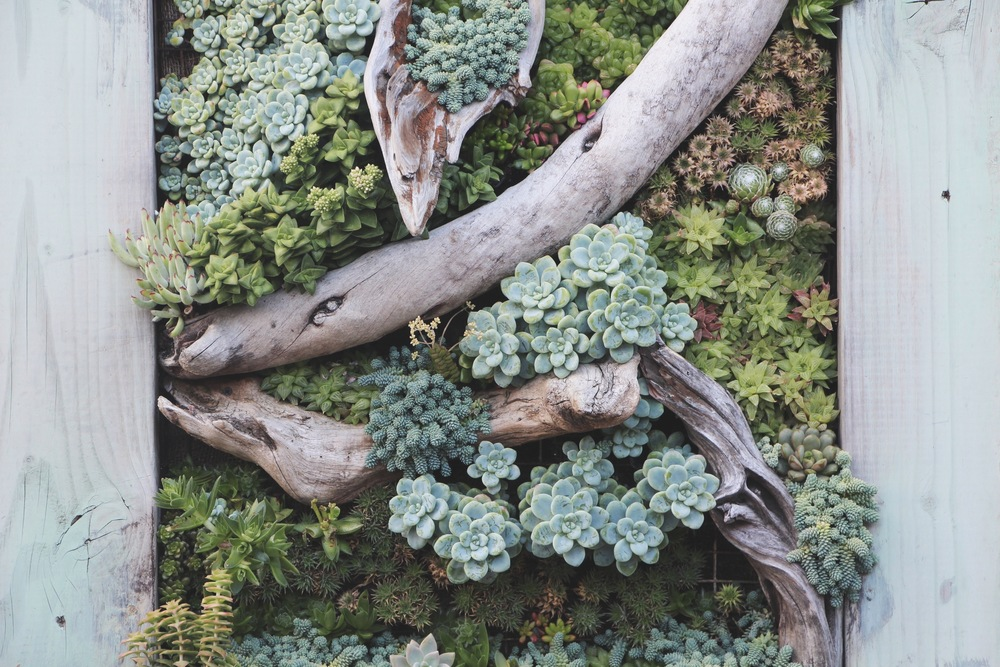 Vertical Succulent Frame Wall at Succulent Cafe Oceanside via Needles + Leaves