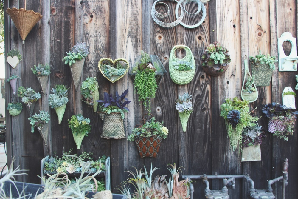 Hanging Succulent Arrangements at Succulent Cafe Oceanside via Needles + Leaves