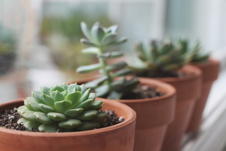 Tips for growing healthy succulents :: How to grow healthy succulents via Needles + Leaves