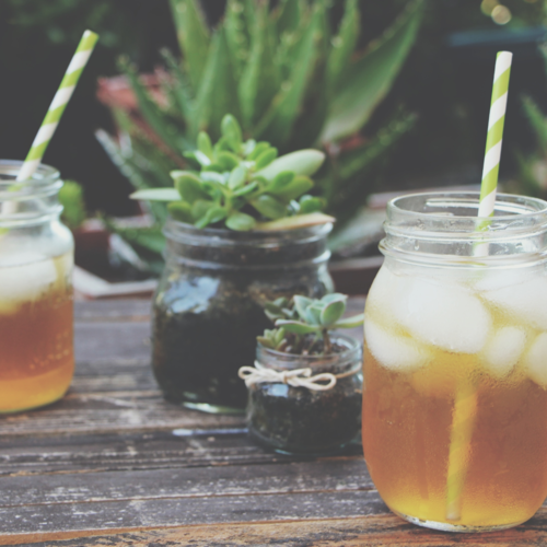 Iced Tea and Succulents: A Garden Tour