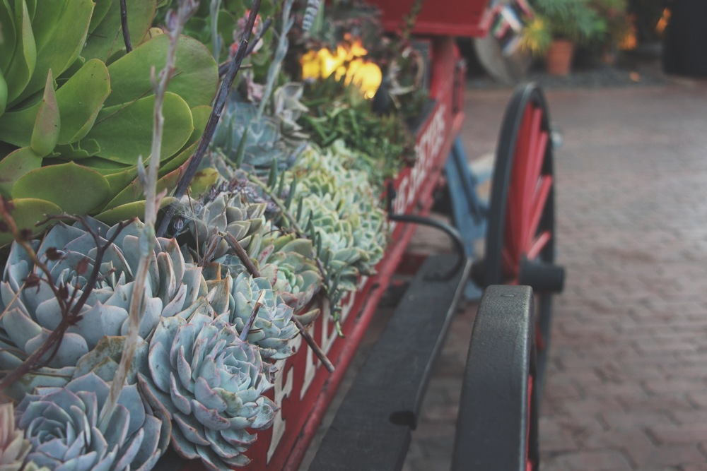 Cacti and Succulents in Old Town, CA via Needles + Leaves