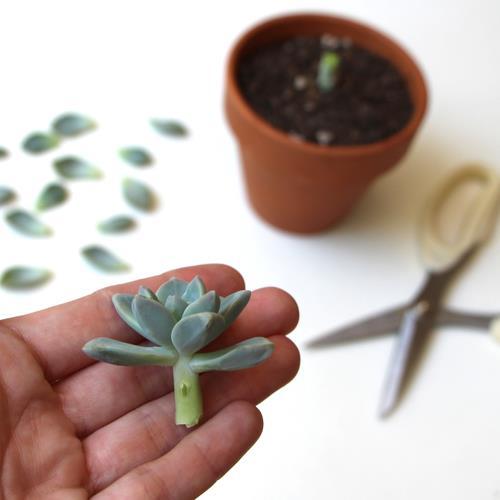 Needles + Leaves