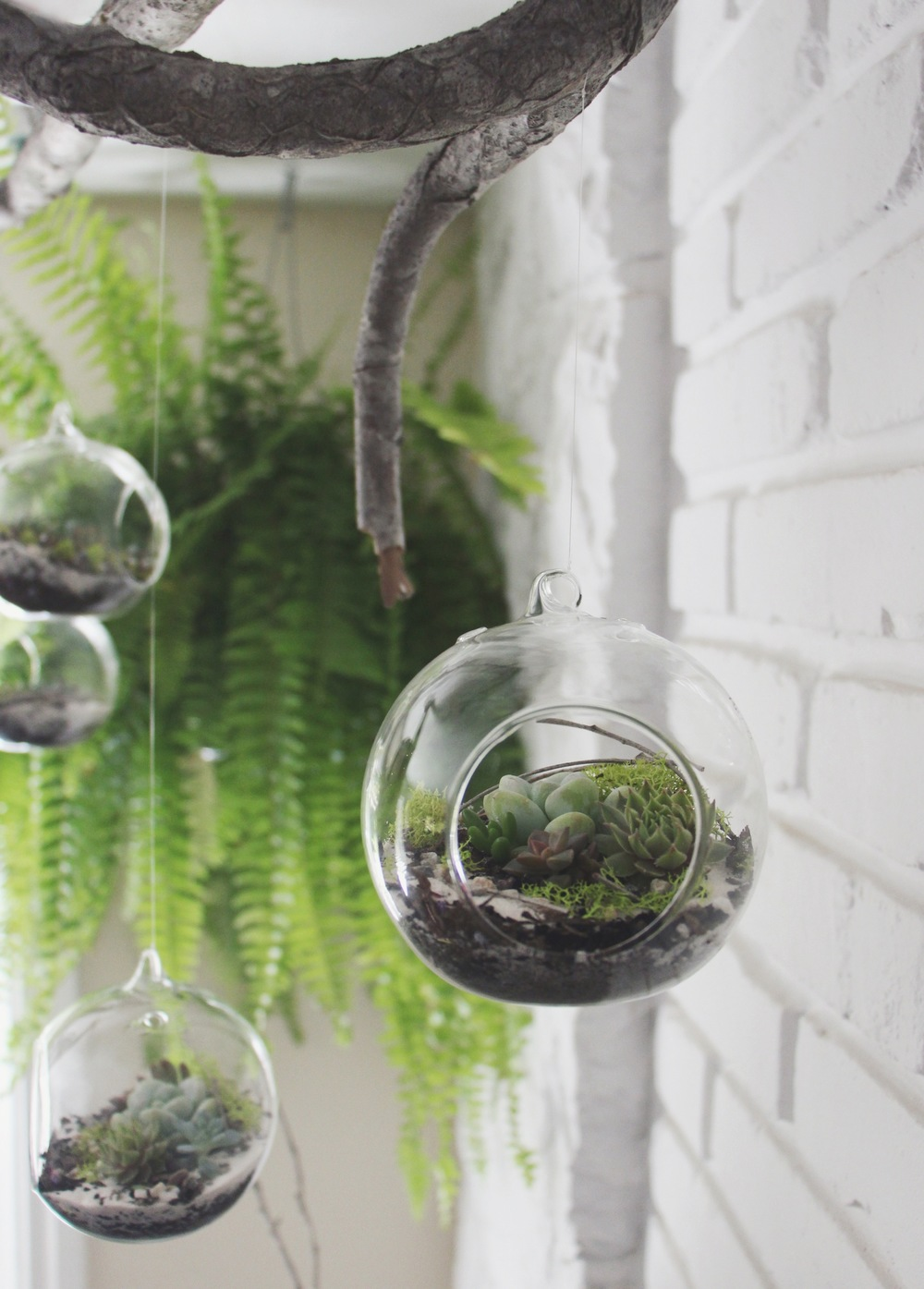 diy hanging succulent terrarium needles leaves. Black Bedroom Furniture Sets. Home Design Ideas