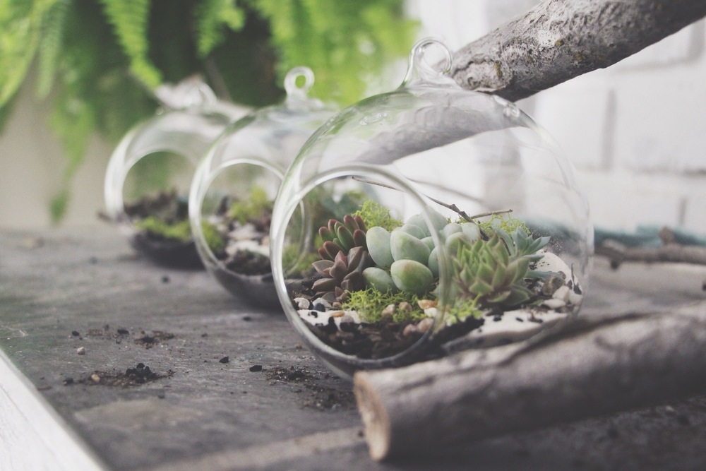 DIY Hanging Succulent Terrarium for Petunia Handbags Blog via Needles + Leaves