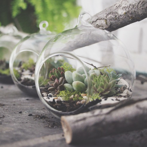 DIY Hanging Succulent Terrarium