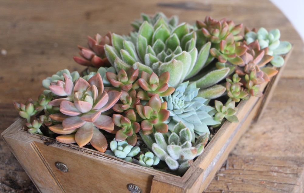 how-to-arrange-succulents-needles-and-leaves-needlesandleaves_net.jpg