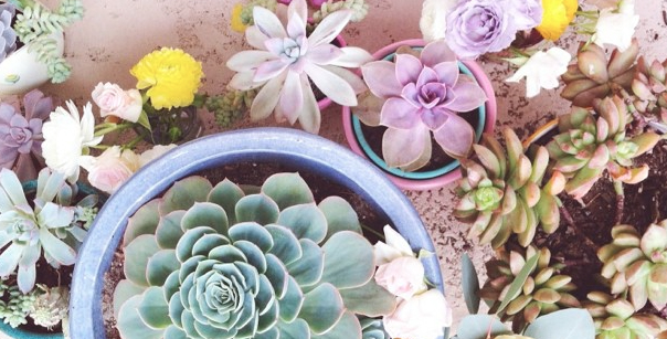 succulents-style-with-jaime-marie-hill-needlesandleaves_net.jpg