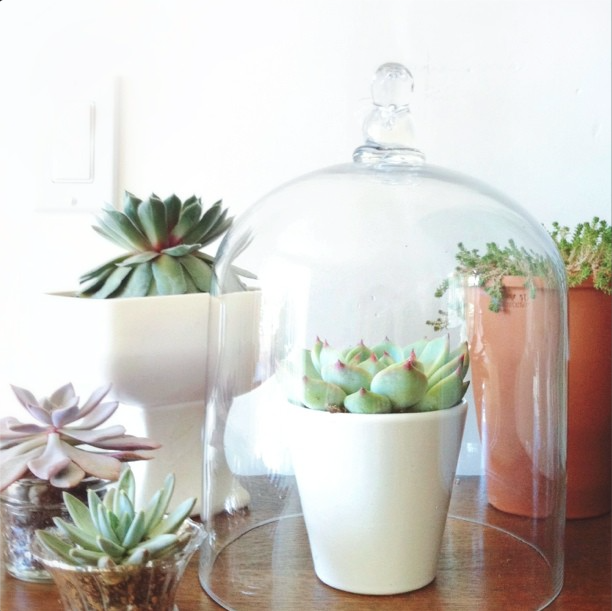 Succulent Style with Jamie Marie Hill