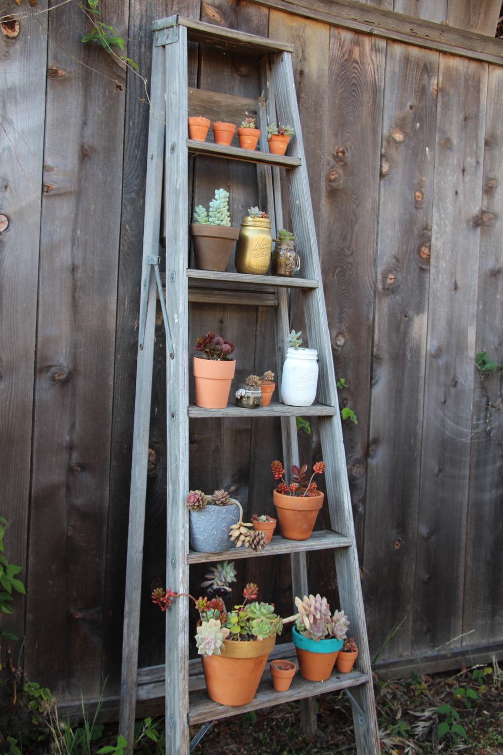 succulent-ladder-seaside-succulents-a-garden-tour-needlesandleaves_net.jpg