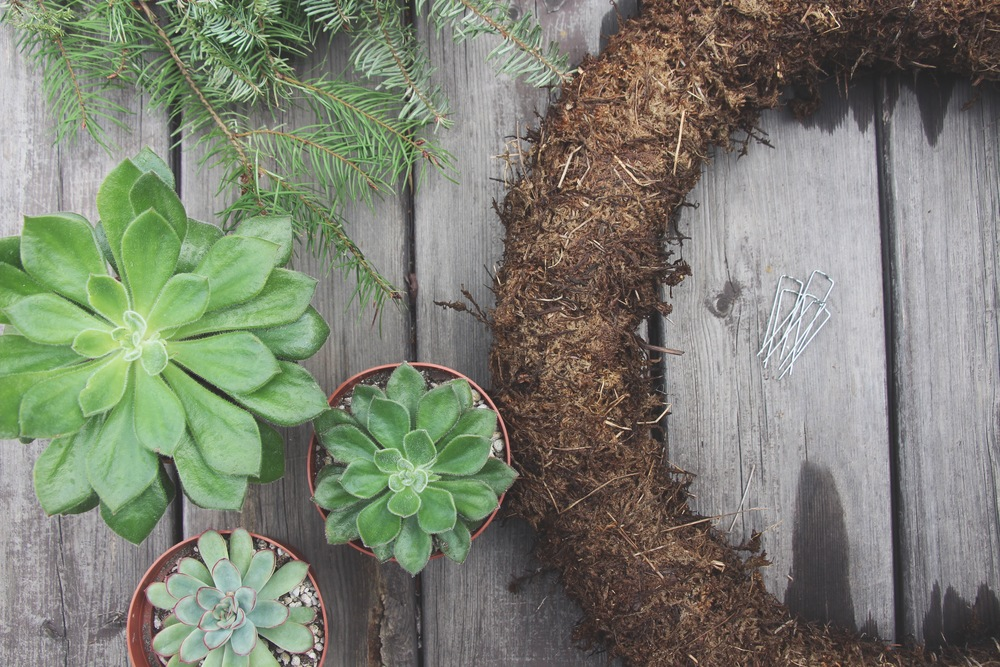 Supplies needed for DIY Living Christmas Wreath with Succulents