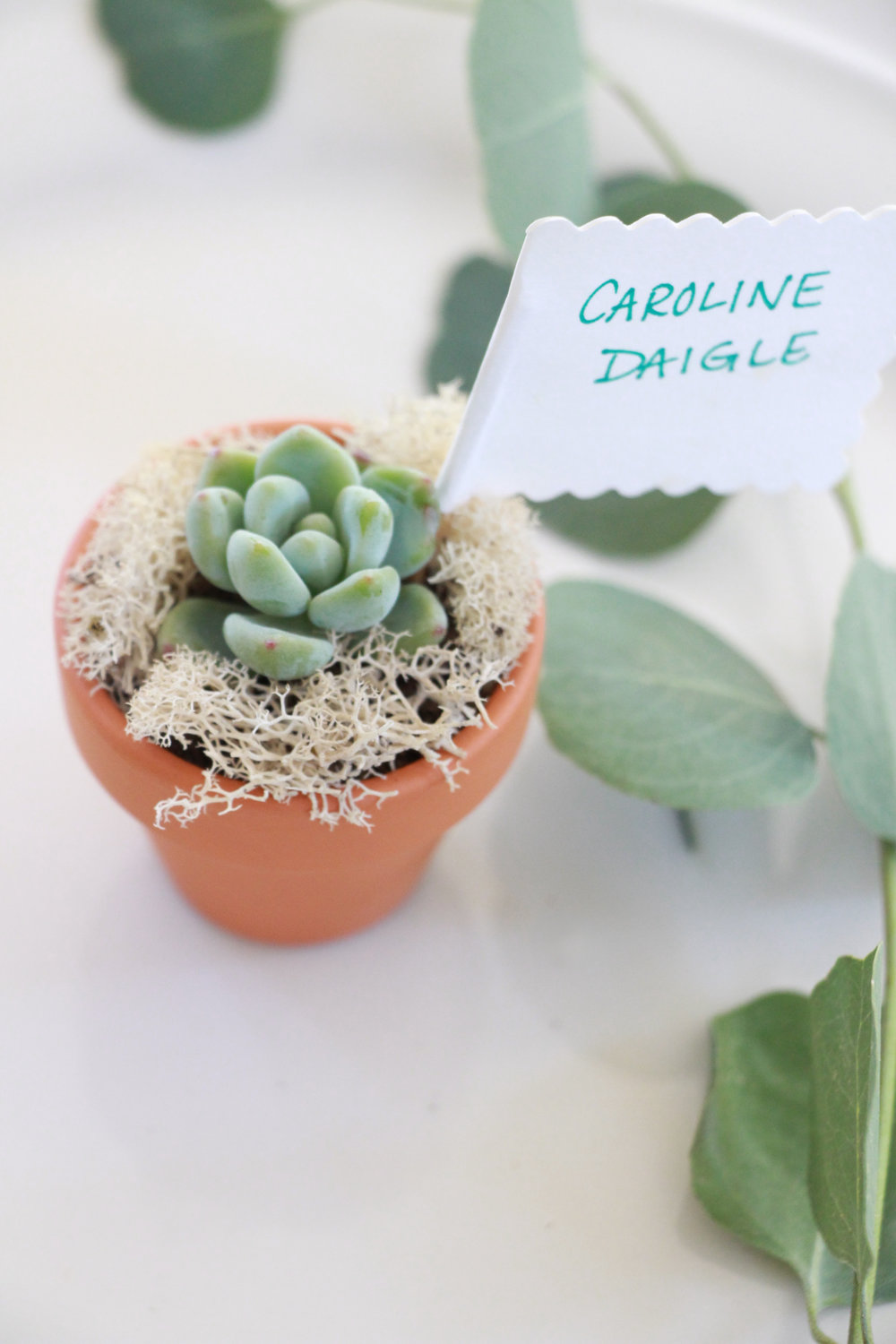 succulent-placecard-party-favor.jpg