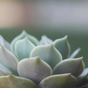 Tips for Growing Healthy Succulents