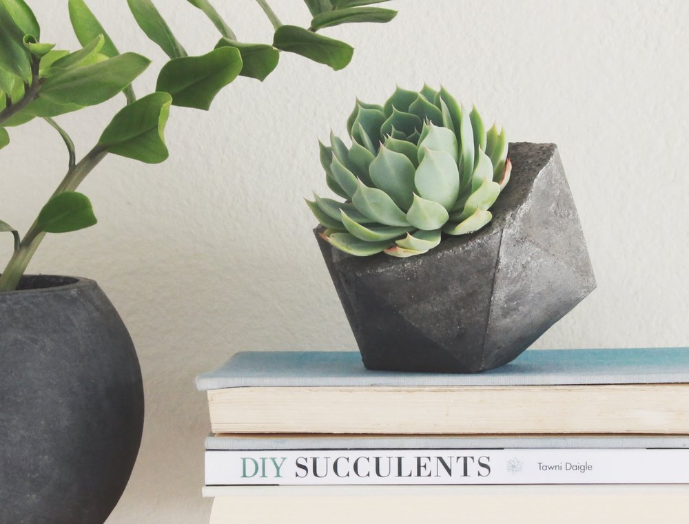 DIY Succulents - THE BOOK