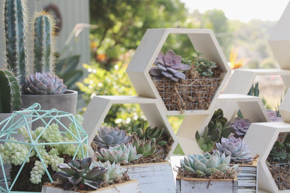 Succulents by Needles + Leaves