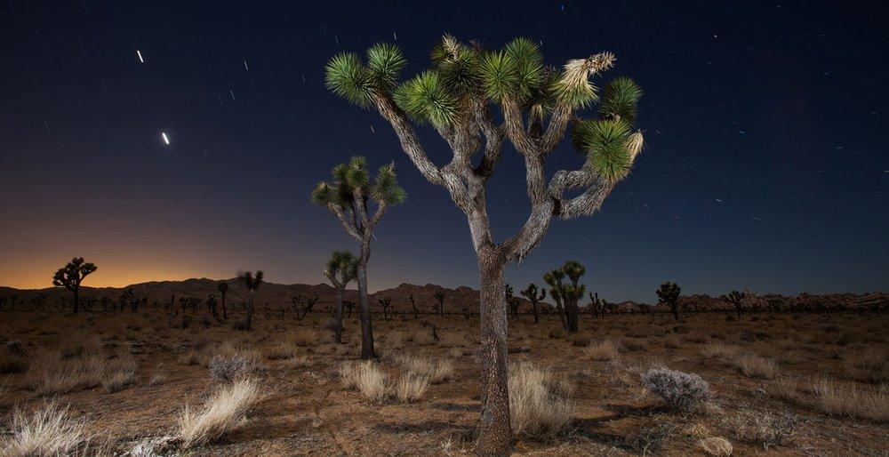 1400-joshua-tree-national-park-california-night-stars.imgcache.rev0a201869cab30e8ea3a7283a91b685bf.web.jpg