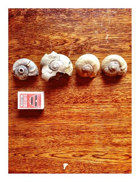 snails.jpeg