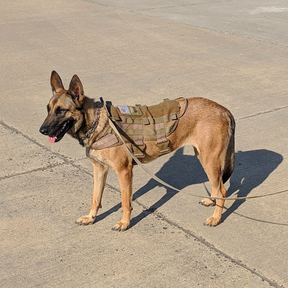 Air Force dog.jpg
