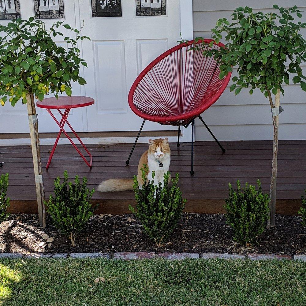 Grumpy cat in Kingsville