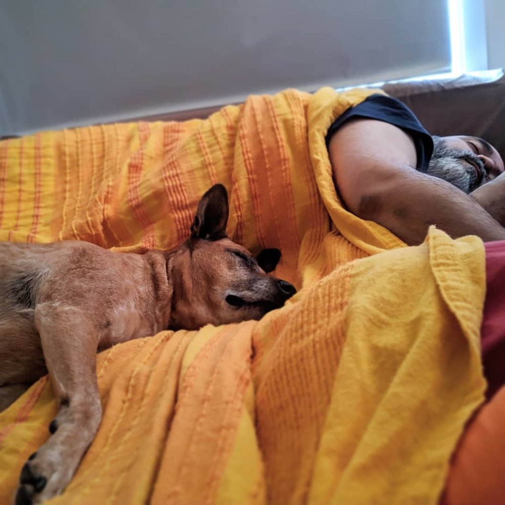 First thing I see most mornings. #love #snoozles #mornings #dogsofinstagram #family @ameelkhan — Nadia Niaz on Instagram ( Source )