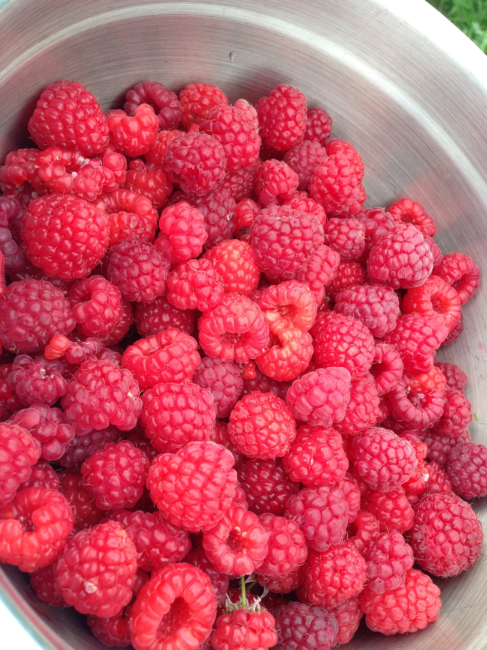 Step 3: Pick all the Berries