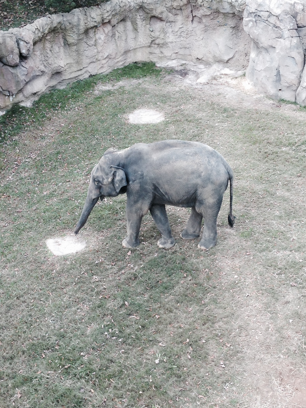 Tini Tiny Asian Elephant
