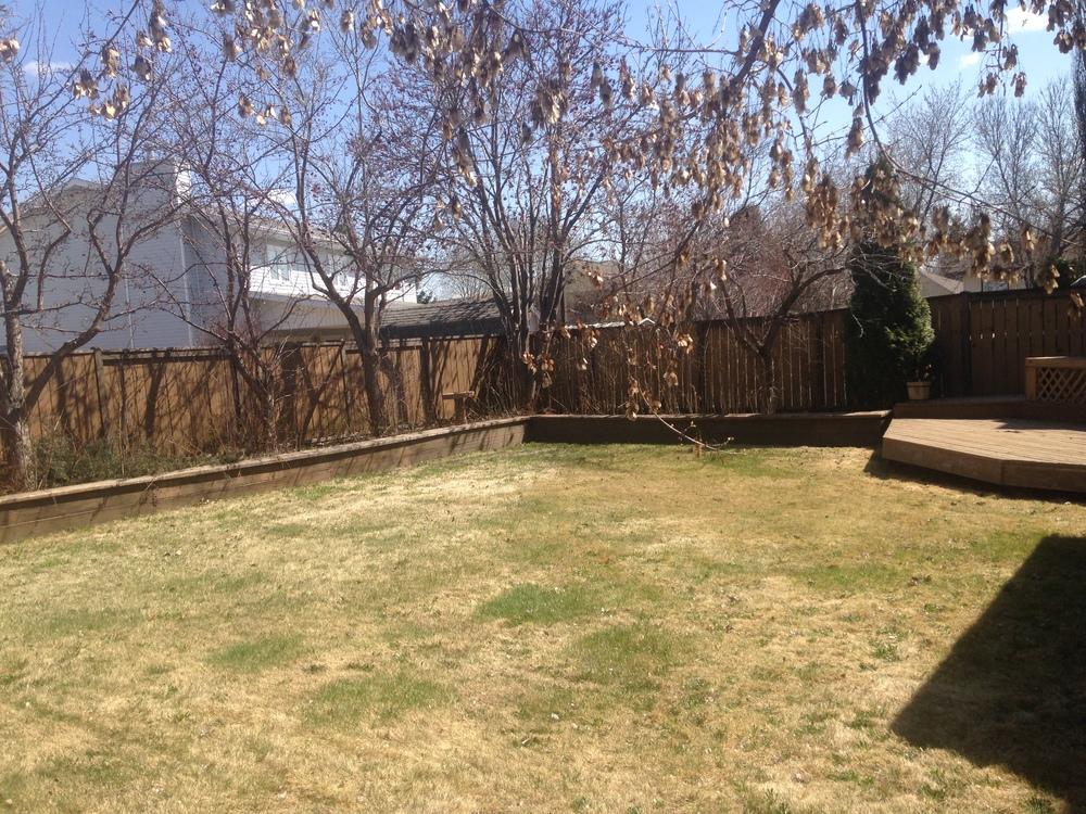 The Big Backyard - Spring time