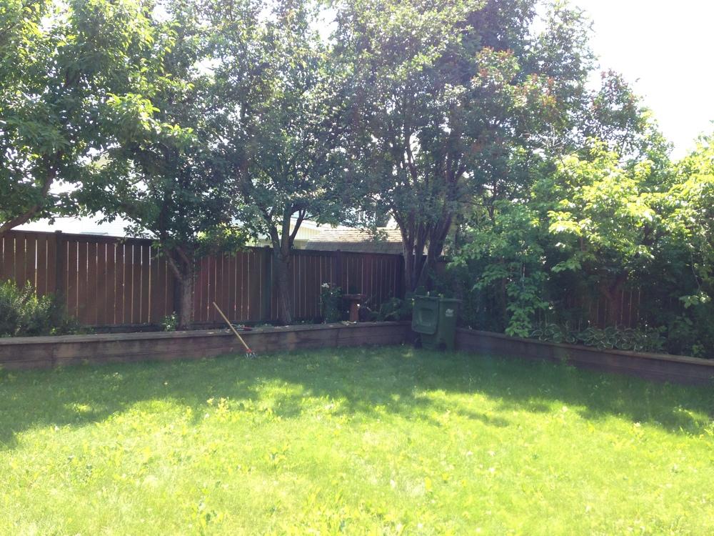 Backyard in Green - Summer