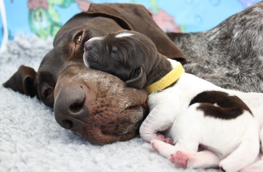 Steve and pups2.JPG