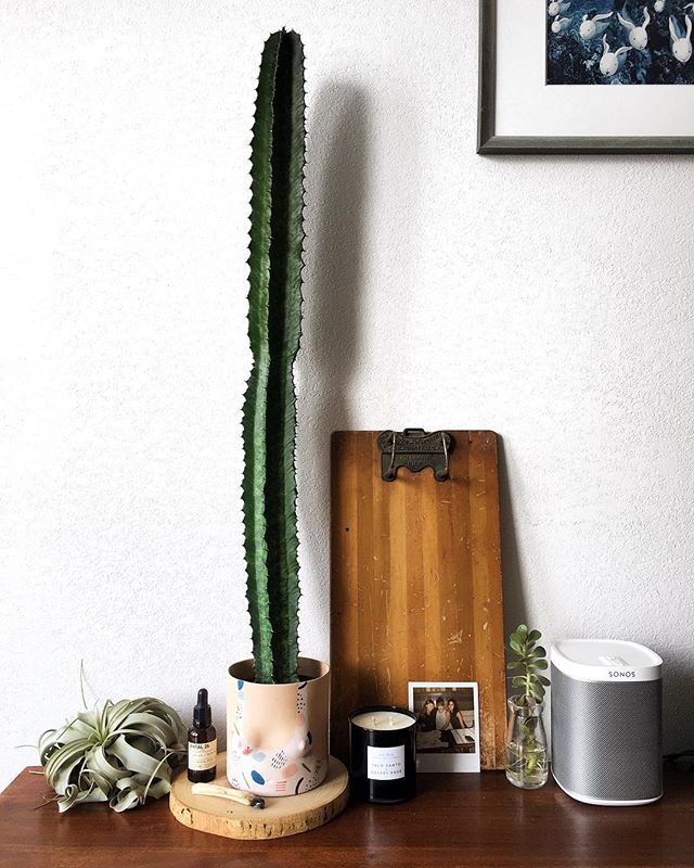 Finally satisfying my need for a cactus after my first trip to Phoenix this year. Meet the newest addition to my plant family thanks to @shop.field 🌵 I'm in love and want so many more. #MomentsWithSunday