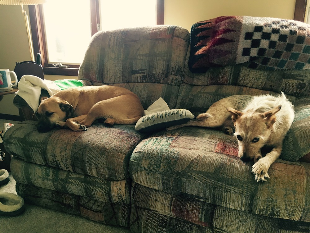 twincorporated canine division couch.jpg