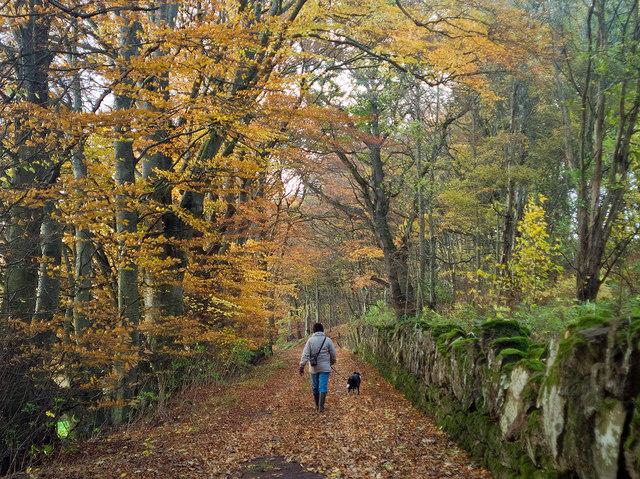 Late Autumn Road.jpg