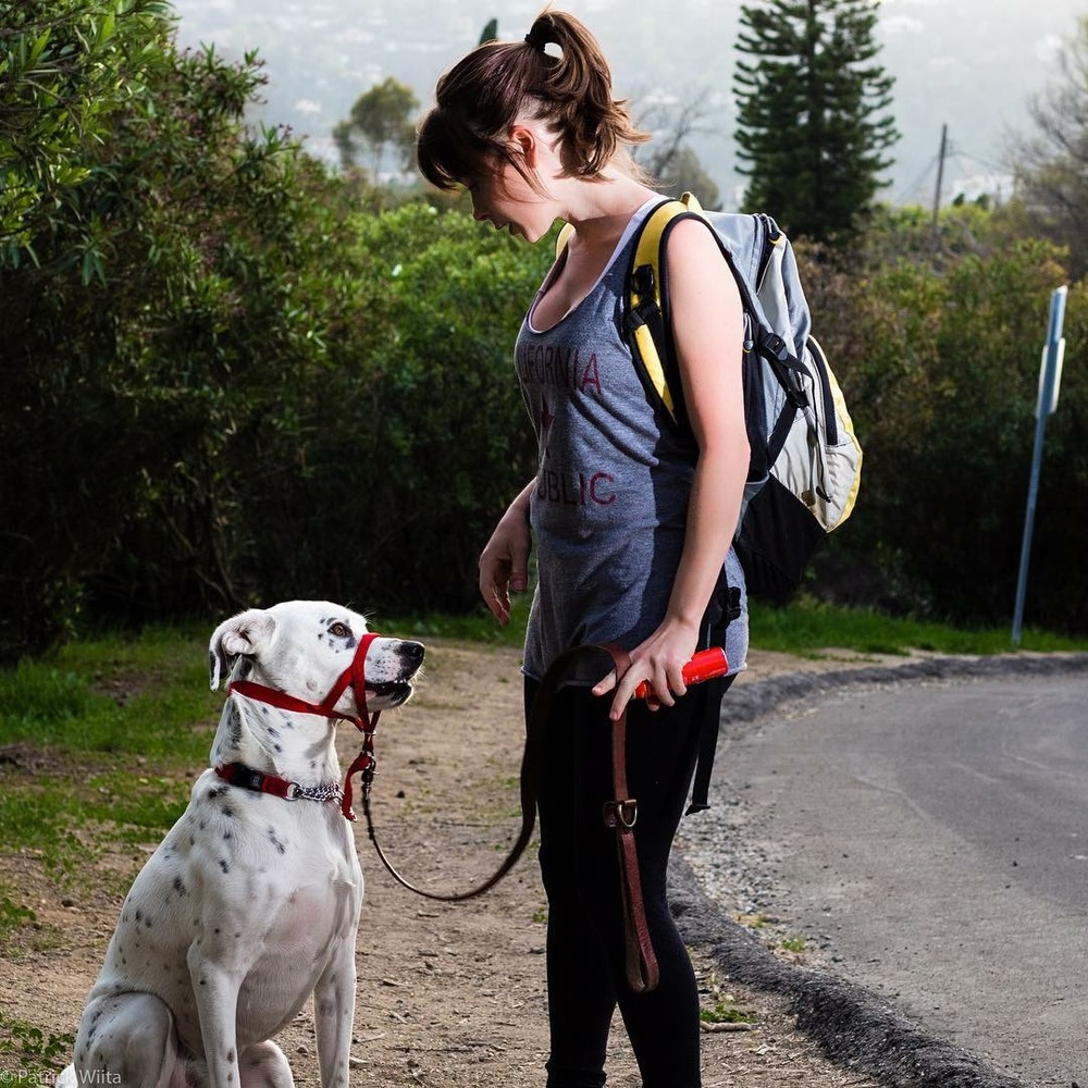 Chance and I working on discipline and impulse control while on a walk. Photo:  Patrick Wiita
