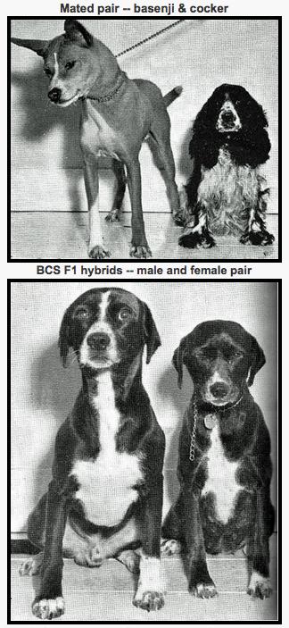 Scott, J.P., & Fuller J.L. (1965). Genetics and the Social Behavior of the Dog. Chicago, IL: University of Chicago Press.