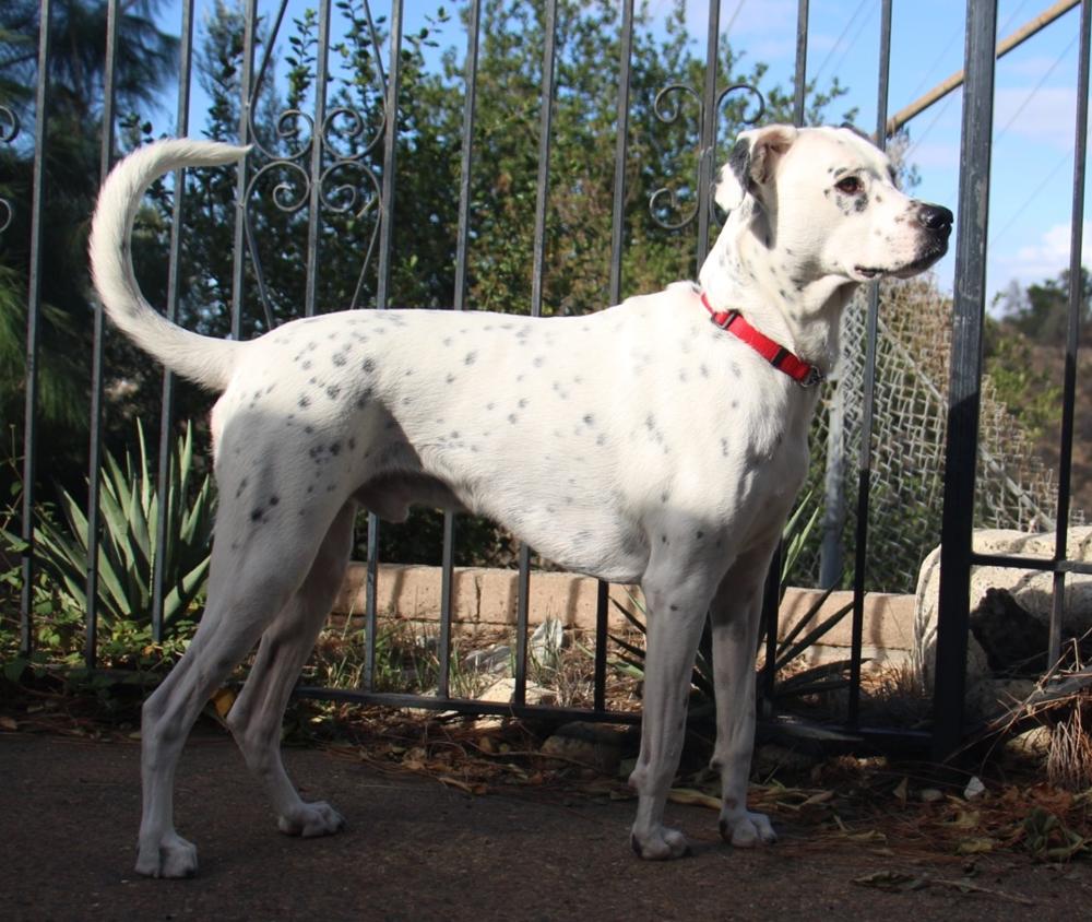 My purebred Tijuana Street Dog.