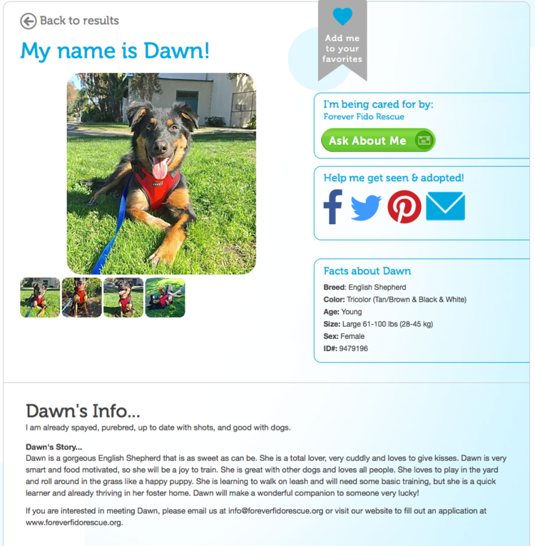 patchwork dogs dog blog new dog guide carrie wiita