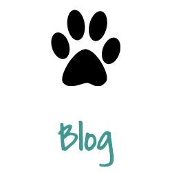 patchwork dogs new dog guide best dog blog