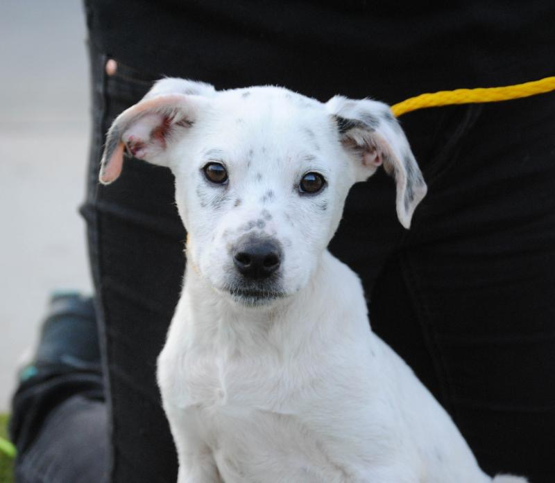 Chance's PetFinder picture. Photo: West Coast Animal Rescue/Sparky and the Gang