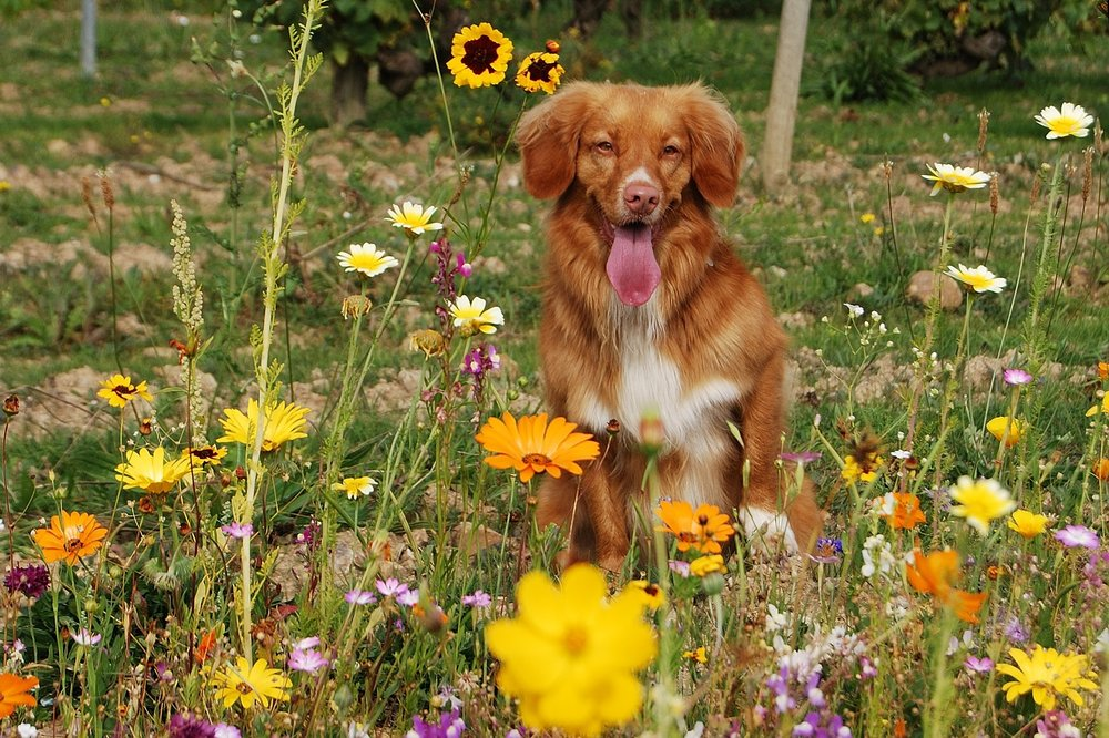 can dogs have allergies allergy test apoquel