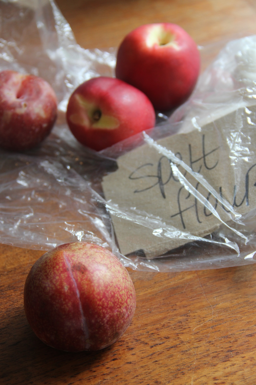 Fruits and Spelt Flour