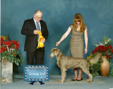 Meradith is our 2nd Long hair, she is more human than dog, she is a Canadian Champion and a United kennel club Champion also getting a Best in Show at a United Kennel club show in  2011 and is now enjoying Rally