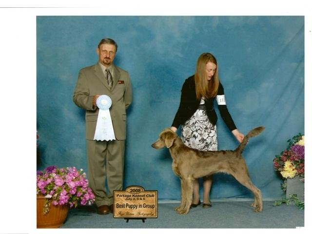 Chevy was our 1st long hair, getting puppy group at his 1st show. He is a Canadian Champion and a United Kennel club Champion