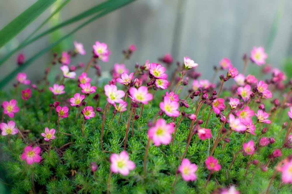 P0023-Wild Flower Focus-XLarge.jpg