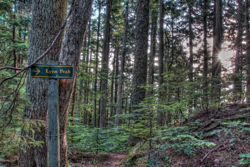 P0140-Lynn Peak This Way-XLarge.jpg