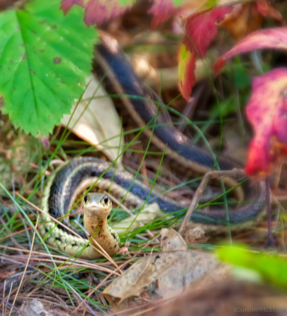 P0138-Snake Eyes-XLarge.jpg