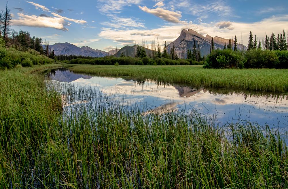P0343-Vermilion Lakes Marshland-XLarge.jpg