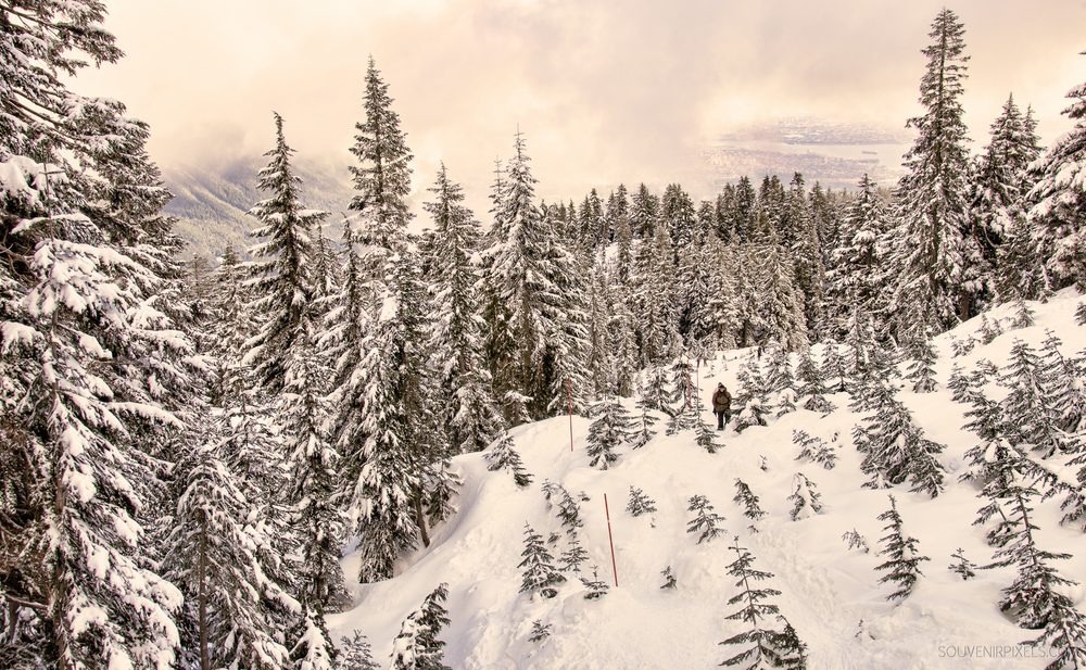 P0355-Snowshoeing Cypress-XLarge.jpg