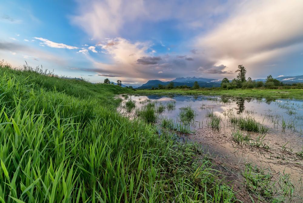 P0475-New Spring Grass-XLarge.jpg