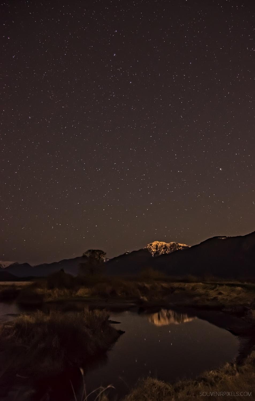 P0428-Pitt Wildlife Stars-XLarge.jpg